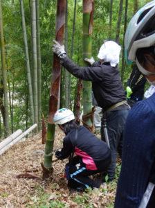 地区別竹の子とり